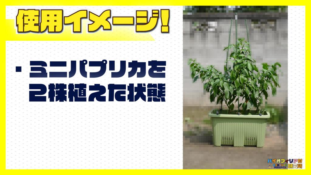 楽々菜園深型600プランターにミニパプリカ(ピーマン)を2株植えた状態の説明