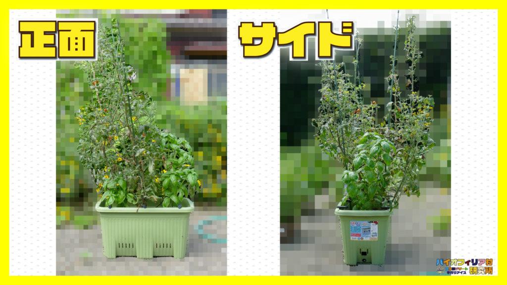 楽々菜園深型600プランターの使用例・栽培例